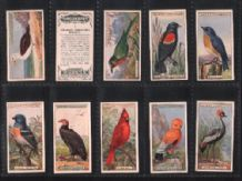 TOBACCO Cigarette CARDS Foreign Birds 1924 by Ogden's